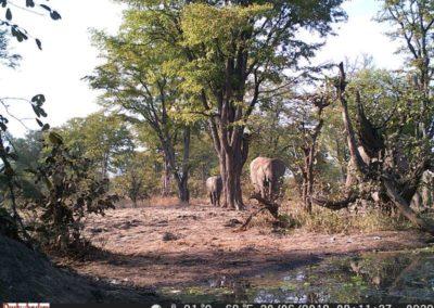 Elephant herd coming to drink - Luke Veen - Zambia