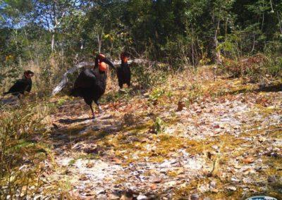 Ground hornbill2 - National Geographic - Okavango Wilderness Project
