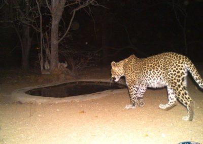 Leopard6 - Chris Thorpe
