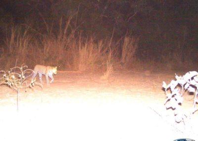 Leopard_1 - Luke Veen - Zambia