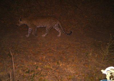 Leopard_2 - Luke Veen - Zambia