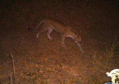 Leopard_3 - Luke Veen - Zambia