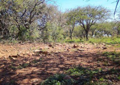 Slender mongoose - Zulu Rock Game Ranch - KZN