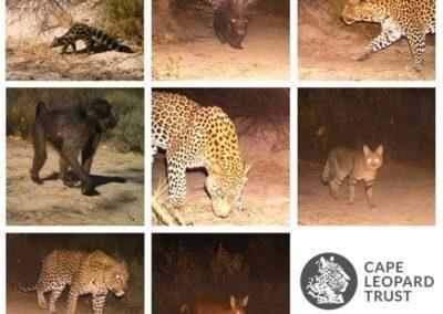 Varied species_1 - Cape Leopard Trust