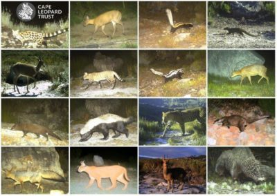 Varied species_2 - Cape Leopard Trust