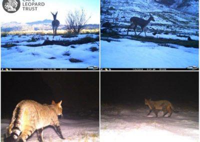Varied species_3 - Cape Leopard Trust