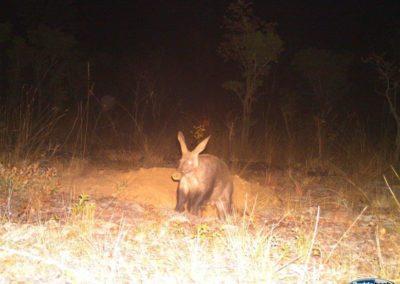 Aardvark - Nat Geo - Into the Okavango