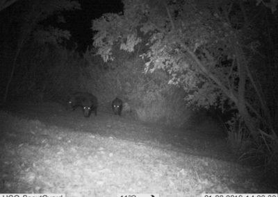 Bush Pigs_4 - WP Guardians