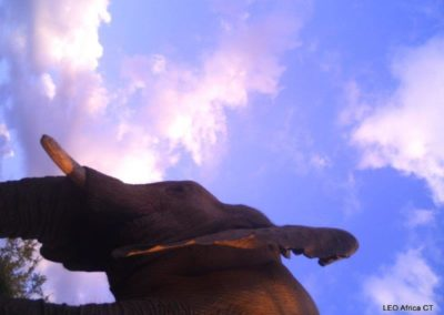 Elephant bull_3 - LEO Africa - Volunteers for Wildlife and Conservation