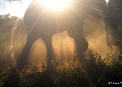 Elephant passing at sunset - LEO Africa - Volunteers for Wildlife and Conservation