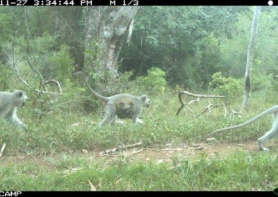 Vervet monkey troop - Richard McKibbin - Zimbali Coastal Estate
